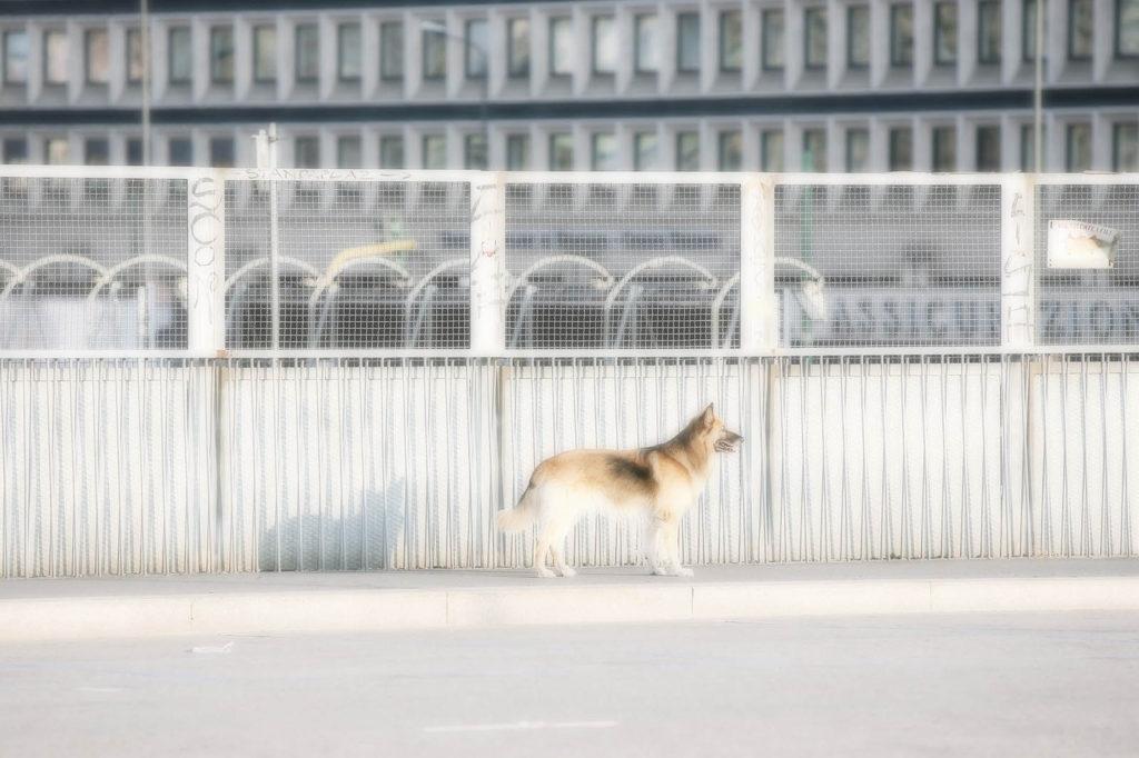 Milano15Agosto max Botticelli spazioRaw Milano